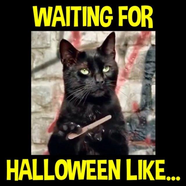 Funny Meme Halloween : Best halloween memes images on pinterest ha funny