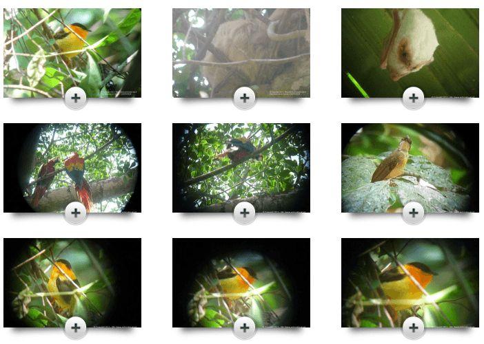 Cliquez ici si vous aimez la nature, voici le top 5 des sites pour l'observation de la faune et de la flore du Costa Rica avec les oiseaux du Costa Rica...