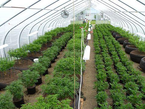 Indoor and light dep all together before the outdoor for Indoor gardening rainier oregon