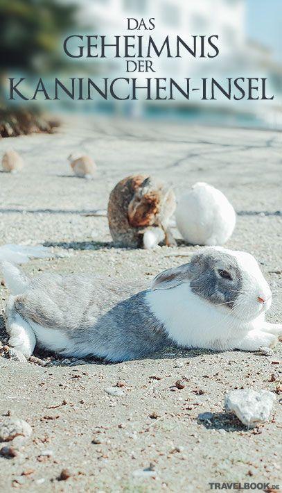 So wie wir zu Ostern überall Häschen sehen, geht es den wenigen Bewohnern Okunoshima täglich. Hunderte Kaninchen unterschiedlicher Rassen leben hier und machen das japanische Fleckchen Erde zu einem beliebten Reiseziel. Doch das Gehoppel, das heute das Auge erfreut, hat in Wahrheit einen ernsten Hintergrund. TRAVELBOOK erzählt die Geschichte der ungewöhnlichen Insel.
