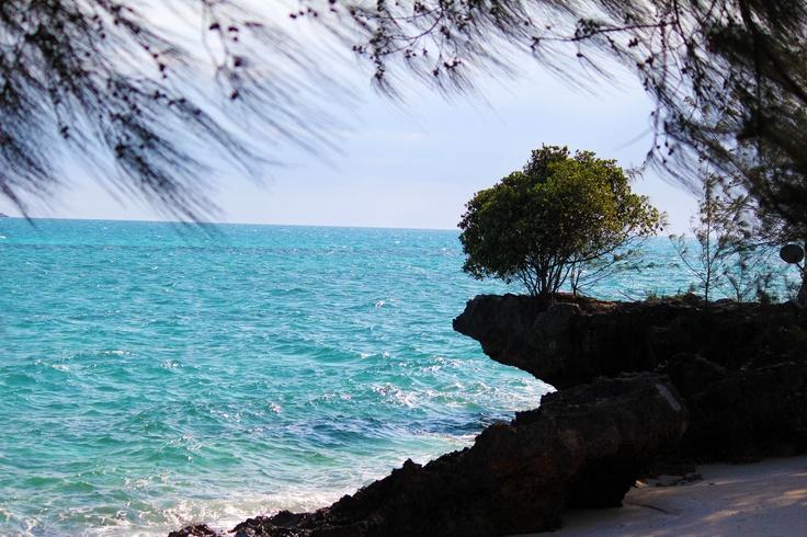 Brave tree.. Zanzibar coast