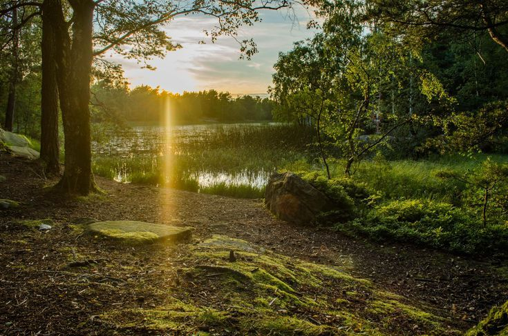 Forest Sunset Gothenburg Sweden [OC][4928×3264] el…