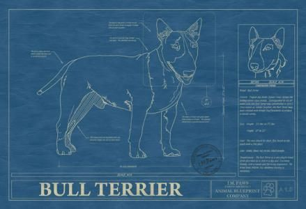 131 best dog blueprints images on pinterest dog art american and animal blueprint company bull terrier dog blueprint malvernweather Image collections
