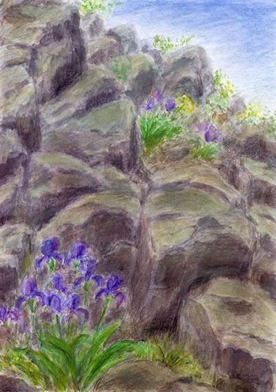 Plants (iris) on basalt rock, Lovoš, České středohoří, north Bohemia.  Watercolor and drawing  by Jana Haasová