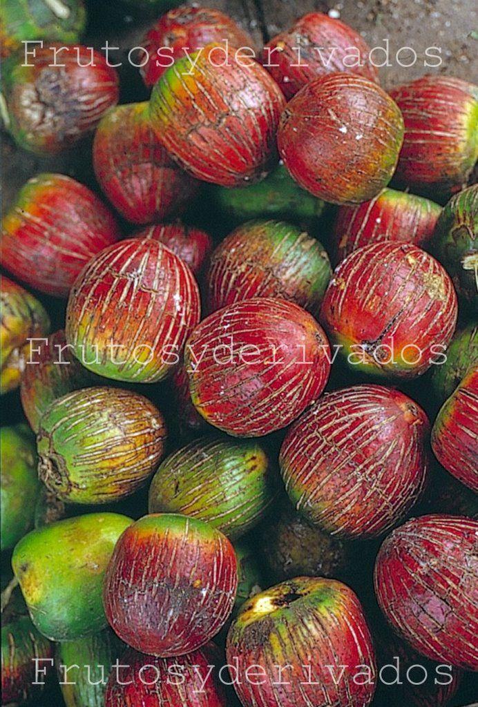 Frutos, especies y derivados de la Selva Peruana: El Pijuayo - Descripcion
