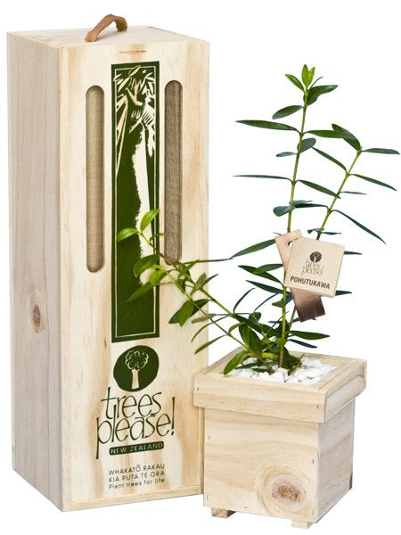 Pohutukawa Tree Gift Box $72,50