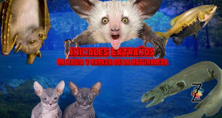 Animales extraños: La magia y rareza de la naturaleza