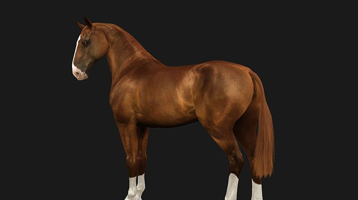 half shaven tail - by Alastair Schrödinger @ Equus Sims