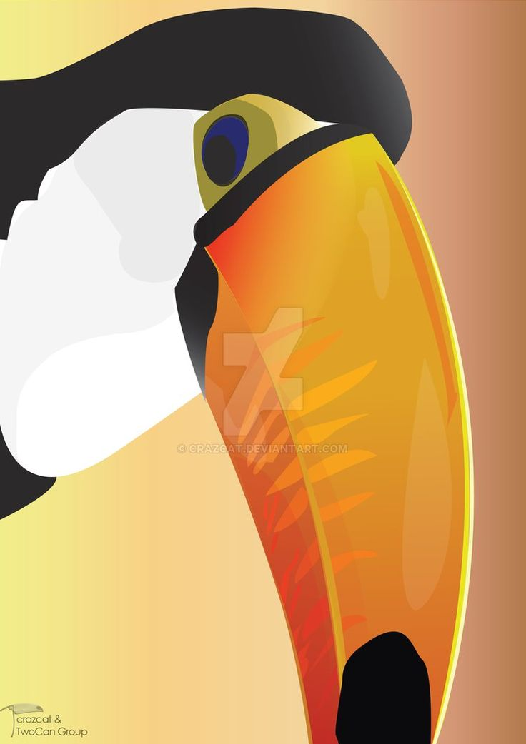 how to draw a toco toucan
