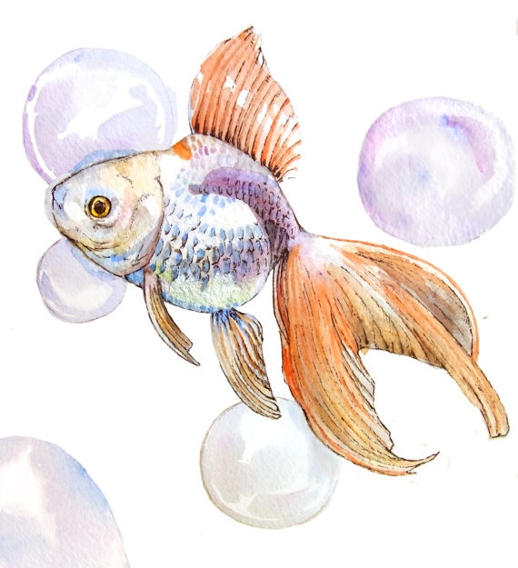 Gold fish - watercolor paiting