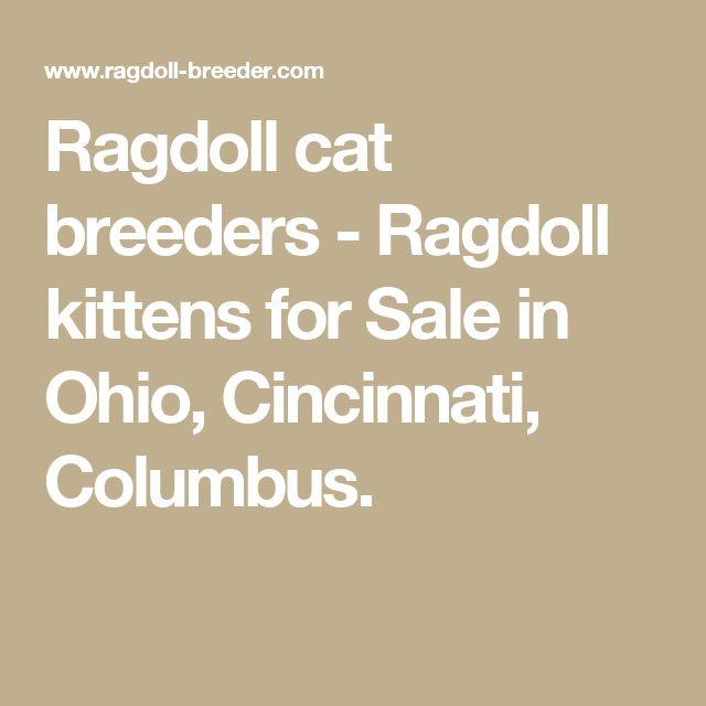 Ragdoll cat breeders - Ragdoll kittens for Sale in Ohio, Cincinnati, Columbus.