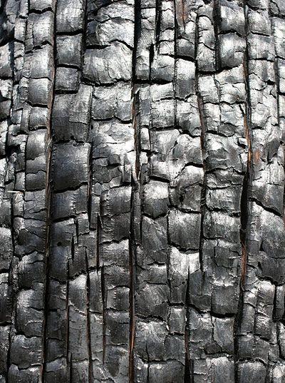 charred wood #texture  Dit is boomschors. Je ziet hier duidelijk hoe het hout aan zou voelen. Dit heet de textuur. Ook zie je hoe de schors is opgebouwd. Dit is de structuur van de boomschors.