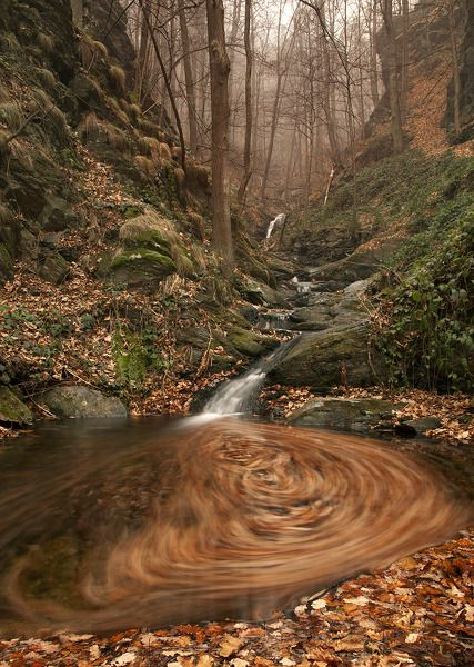 """""""Enchanted Woods"""" by Simone Miotto, taken in the woods near where she lives, Val Sangone, Italy"""