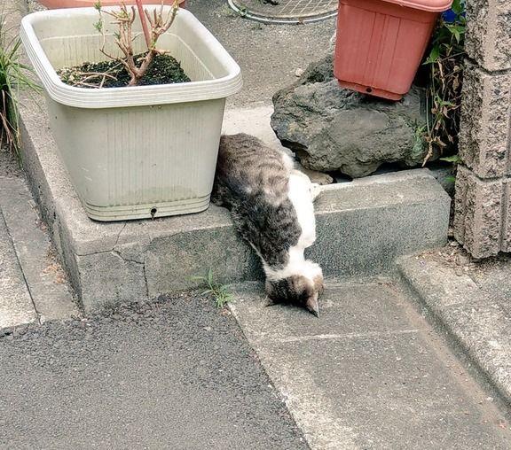 ネコの液状化現象?