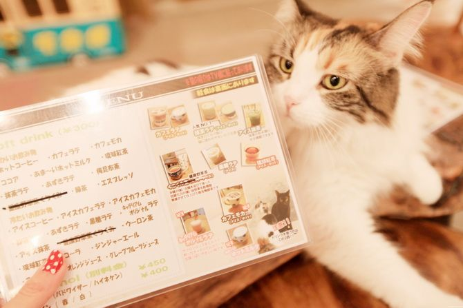 """What exactly is a """"cat cafe""""? A place where you can grab a drink and spend time with your fabulous feline friends of course!"""