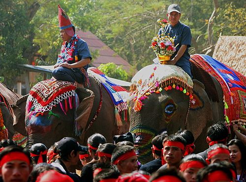 Elephants is one of the transportation in Laos, Asia