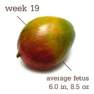 19 Weeks Pregnant - I held up a mango to my belly in the grocery store today . . . my bump must be GMO! Phantom is getting more active morning, evening, and sometimes mid-day. Felt the first outside-the-belly kick which was an amusing sensation. Slacked off on exercise and diet this week due to a nutty work and social schedule, and am resetting starting Sunday.