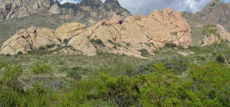The Dripping Springs Natural Area has over four miles of easy hiking trails, including the Dripping Springs Trail, which shows off desert scrub and low elevation pinon-juniper and oak woodlands. The area also boasts excellent wildlife viewing opportunities, including excellent year-round viewing of red-tailed hawk, Gambel's quail, golden eagle and rock squirrel. It offers very good year-round viewing of desert mule deer and coyote. Also watch for black-throated sparrow, ladder-backed…