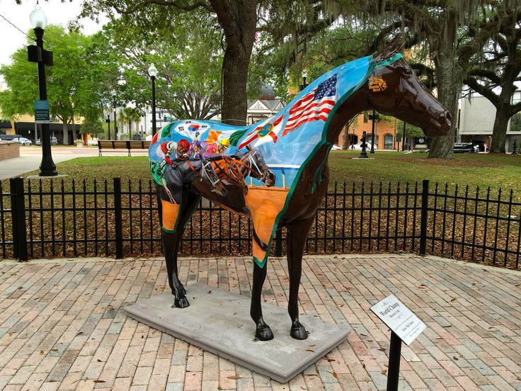 Horse in Ocala, Florida