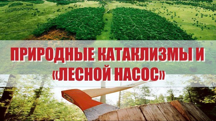 Природные катаклизмы и «лесной насос». Миф или реальность? Научные разра...