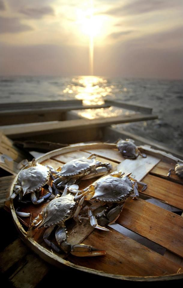 The beautiful Chesapeake Bay, home of Maryland's Blue Crabs.