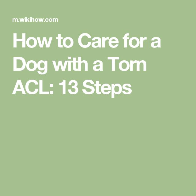 How to Care for a Dog with a Torn ACL: 13 Steps