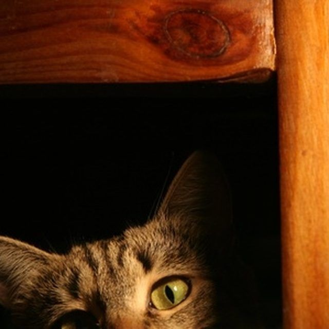 Hidden Cat Urine Stains Can Cause Strong Odors In The Home.