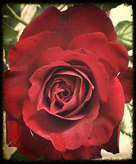 Every rose has its thorn....