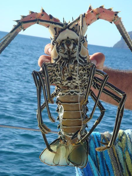 Crayfish #Crustacean #crayfish