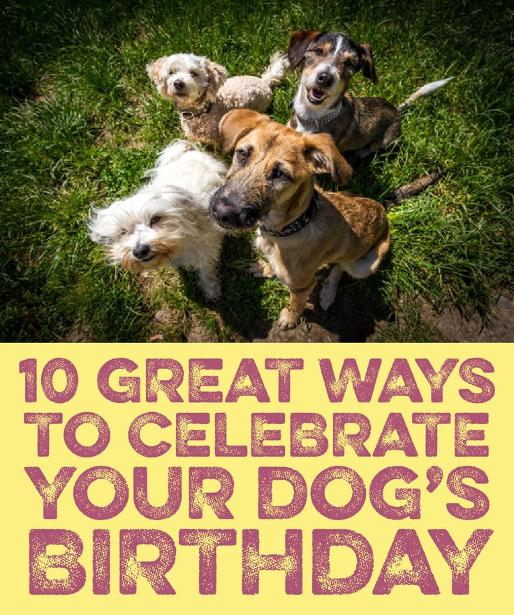 10 Great ways to celebrate your dog's birthday!