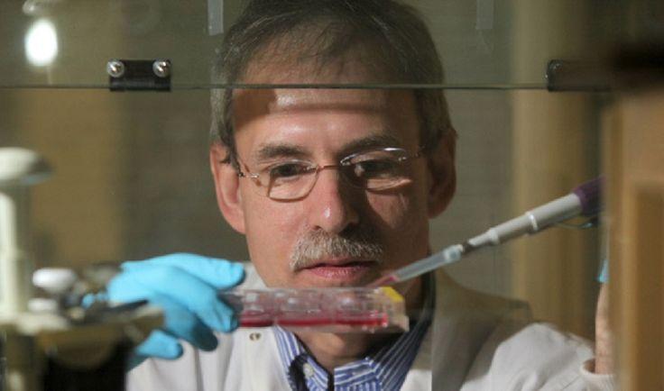 Encuentran una enzima de la piel humana relacionada con el envejecimiento rehttp://www.tendencias21.net/Encuentran-una-enzima-de-la-piel-humana-relacionada-con-el-envejecimiento_a42134.html