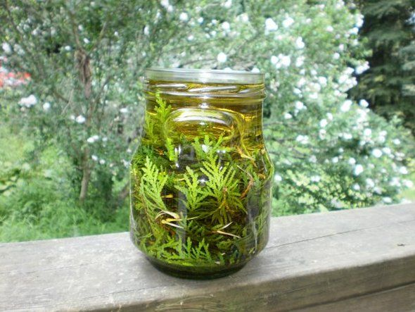 The benefits of infusing herbs in coconut oil, plus recipes for a few combination oils from Ananda at Plant Journeys.