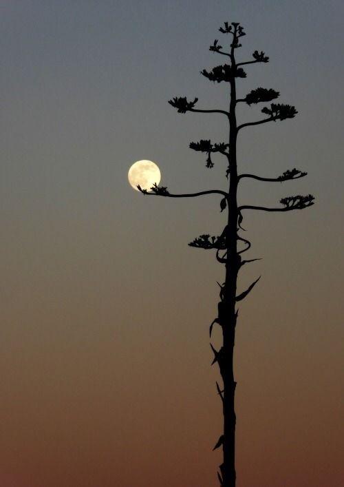 Inexatamente Belas Imagens Claro De Luna Fotografia De La