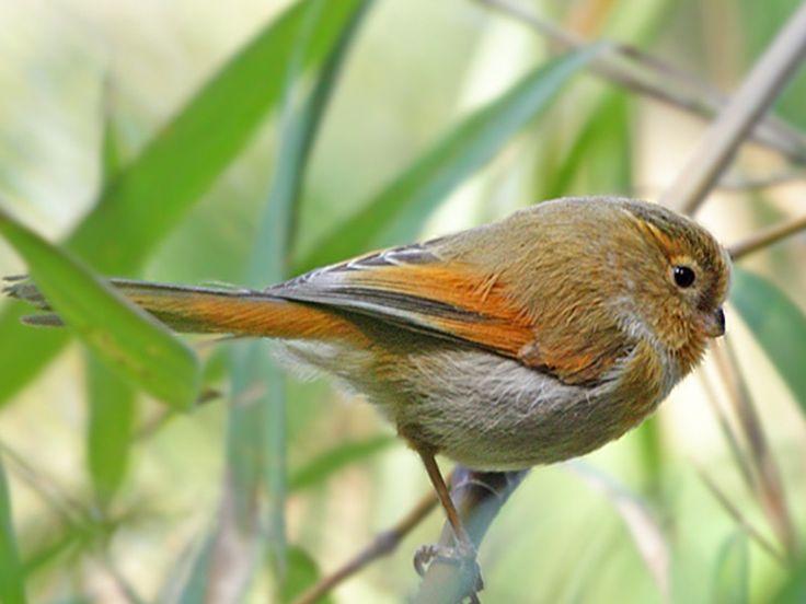 Flora and Fauna of Arunachal Pradesh, India @ Sanctuariesindia.com