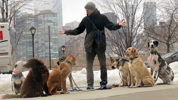 Best Dog Training Classes Nyc
