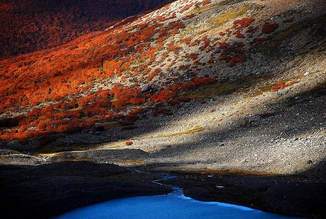 Desde lo alto.    R.N Cerro Castillo   Region de Aysen   Patagonia Chilena