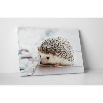 Kicsi süni : Állatok - KaticaMatrica.hu - A minőségi falmatrica és faltetoválás webáruház