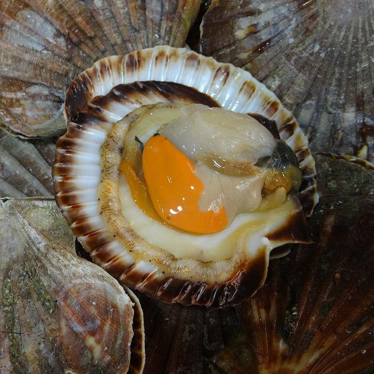 Coquille St-Jacques - Le poisson d'Aligre -