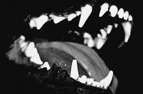 Dark Bite