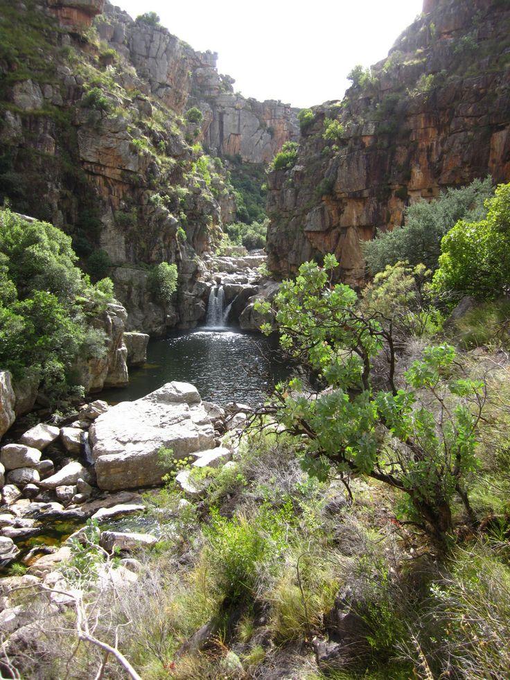 Mountain stream, Groot Winterhoek Mountains, South Africa
