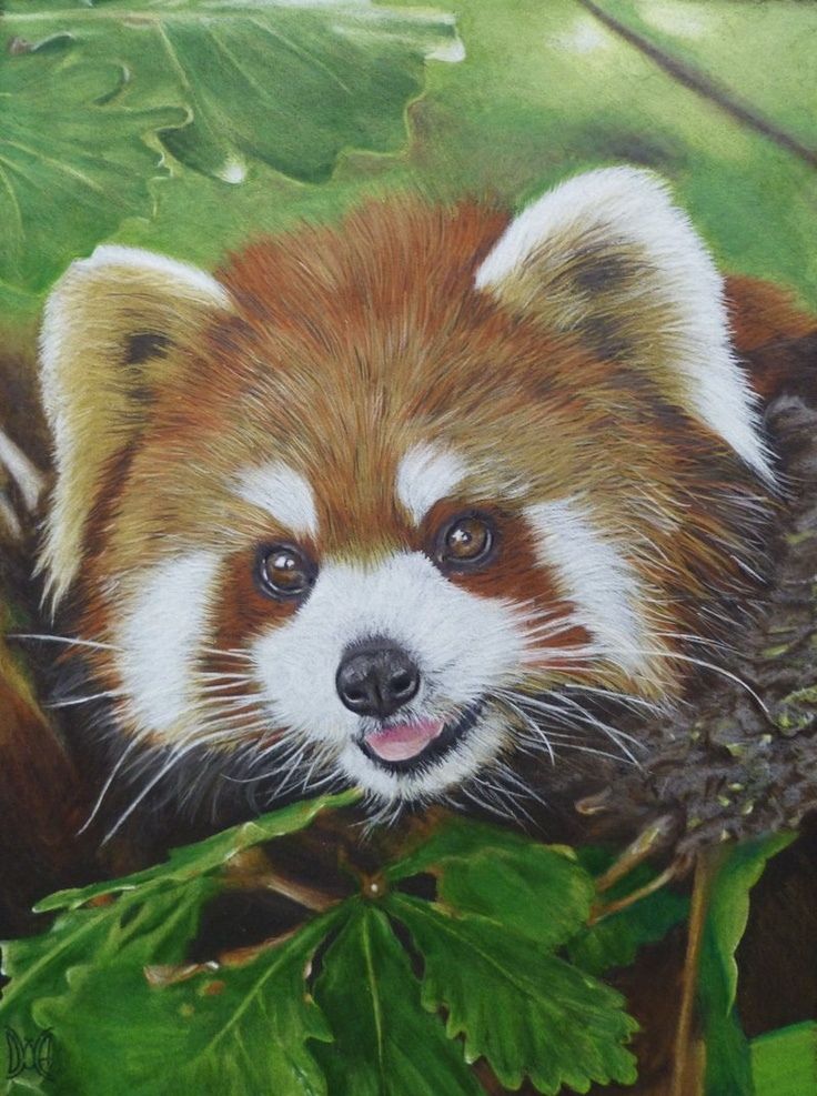 Red Panda by *AnnemiekedW on deviantART