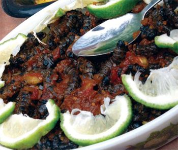 Fried Caterpillars with chili and onion