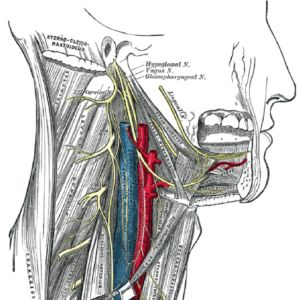 Glossopharyngeal Neuralgia is characterized by severe episodes of pain in the external ear canal, the tongue, the tonsil or beneath the angle of the jaw.