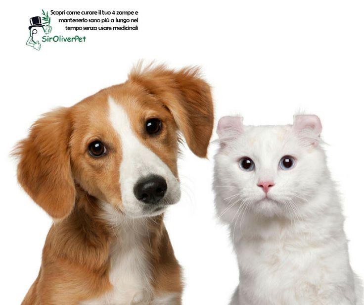 """Se il vostro cane o gatto presenta un aumento della sete (""""Polidipsia""""), un aumento dell'urinazione (""""Poliuria""""), un aumento della fame (""""Polifagia"""") e una concomitante """"Perdita di peso"""" portatelo subito dal veterinario per un controllo perché potrebbe essere affetto da diabete."""