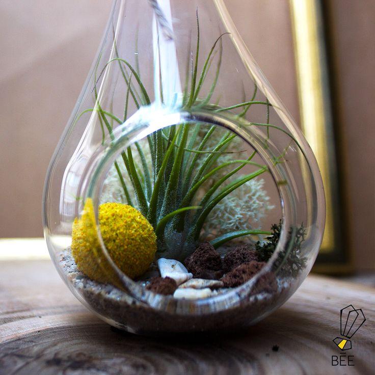 Dünyaya açılan küçük pencereniz: Airplant'ler… Sipariş için: zeynep@beedesignandflowershop.com adresinden iletişime geçebilirsiniz. #beedesignandflowershop#seashell #denizkabugu #art #design #decoration#interiordesign #indoorgardening #nature #plant#green #sculpture #flower #concept #handmade#succulent #çiçek #tasarım #bitki #yeşil #aranjman#arrangement #denizalti #submarine #airplant#çiçektasarımı #deepblue#underthesea