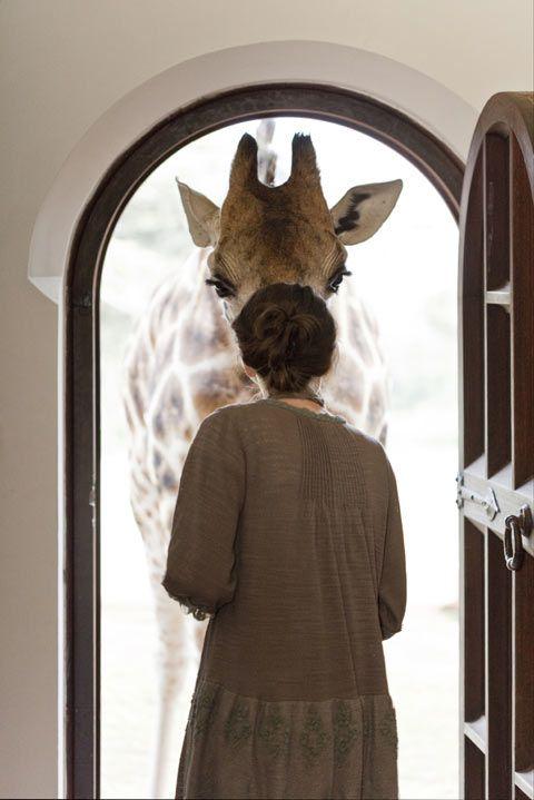 "Robin Moore ""Breakfast with Giraffes"""