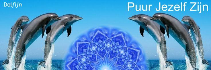 Dolfijnenreis naar Hawaii! Heerlijk zwemmen met dolfijnen, >> Link: http://www.puurjezelfzijn.nu