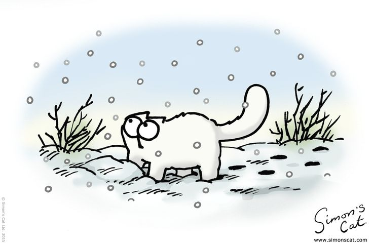 Cats In Snow Pictures