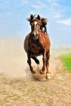 Horse charging google search equine pinterest horse for Thoroughbred tattoo lookup