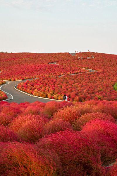 日本・ひたち海浜公園 ドライブ旅行で訪れたい絶景